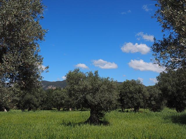 oiltree